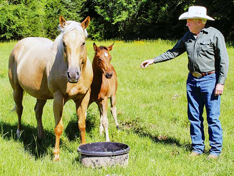Retired cowboy Rick Hargrove shows off one of his Bingo Hickory quarter horses and her colt on a ranch he leases off FM 2022 in Houston County.  He still participates in team roping events with one of his horses. (Photo by Alton Porter/HCCourier)
