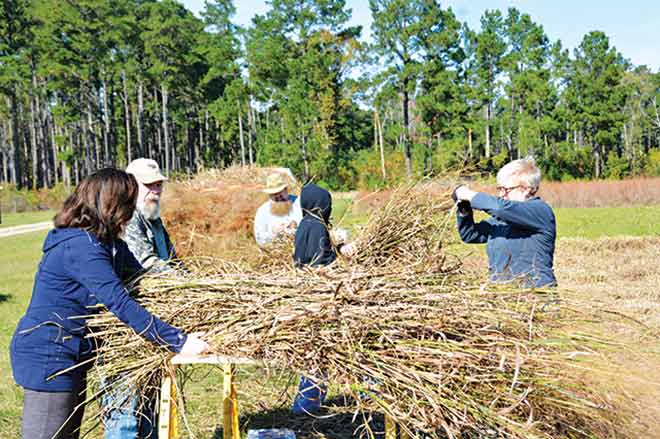 Two decades after the demise of the first replica of a Caddo grass house at Caddo Mounds State Historic Site, a Caddo grass house will rise again on the prairie along the Neches River bottom in 2016.  Volunteers are pictured harvesting switch grass for the house in November 2015.  The next harvest day is scheduled for Saturday, Jan. 23, and volunteers are needed. (Courtesy Photo)